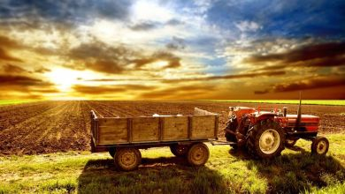 Photo of La producción nacional de alimentos está en peligro por decisiones del Gobierno, advierte el CNA