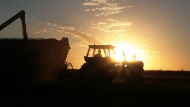 Photo of Tres temas en los que difiere la agricultura comercial y el Gobierno