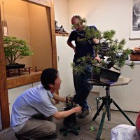 Minoru Akiyama assisted by Peter Warren Demo - Natures Way Bonsai 2014
