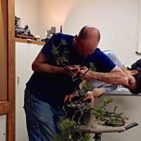 Peter Warren assisted by Minoru Akiyama Demo - Natures Way Bonsai 2014