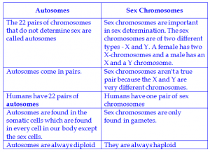 the two sex chromosomes are considered autosomes in human in Detroit