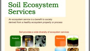 Services of soil ecosystem