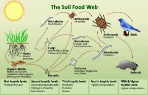What is the role of the soil in the ecosystem