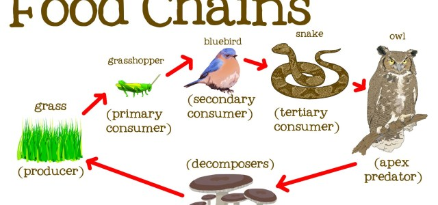What are 5 examples of food chains? Quora.