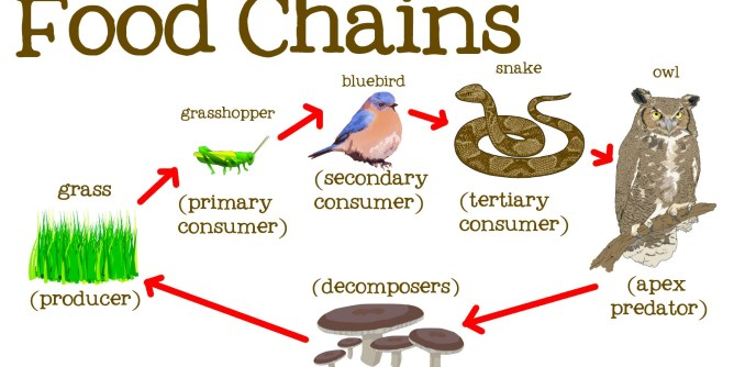 Food Chain Explanation Examples Types Significance Facts Eschool