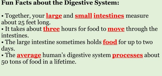Digestive System Interesting Facts Human Body Systems Structure And ...
