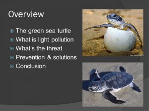 Solutions to light pollution affecting sea turtles