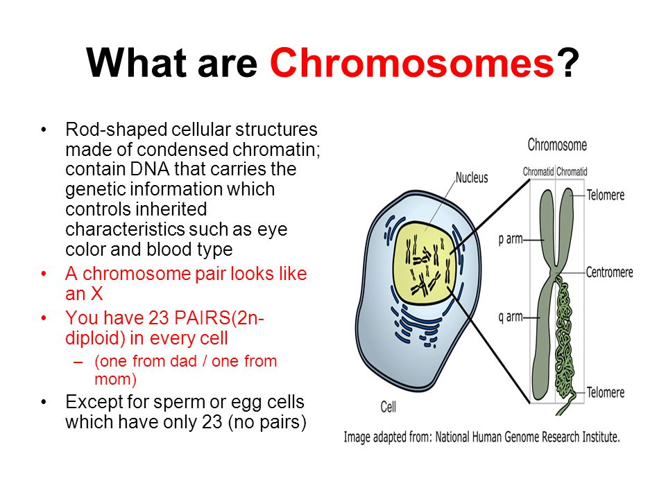What are Chromosomes: Definition, Functions, Types, Formula & Facts About -  Eschool