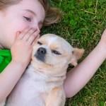 Animais contribuem para a inteligência emocional das crianças