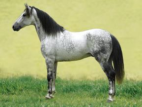 L'évolution du mot pour le cheval