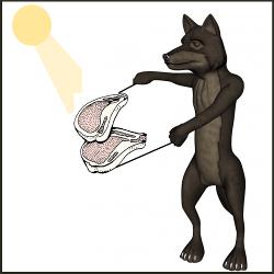 Le loup réel ou imaginiare est très présent parmi les bêtes des contes gascons