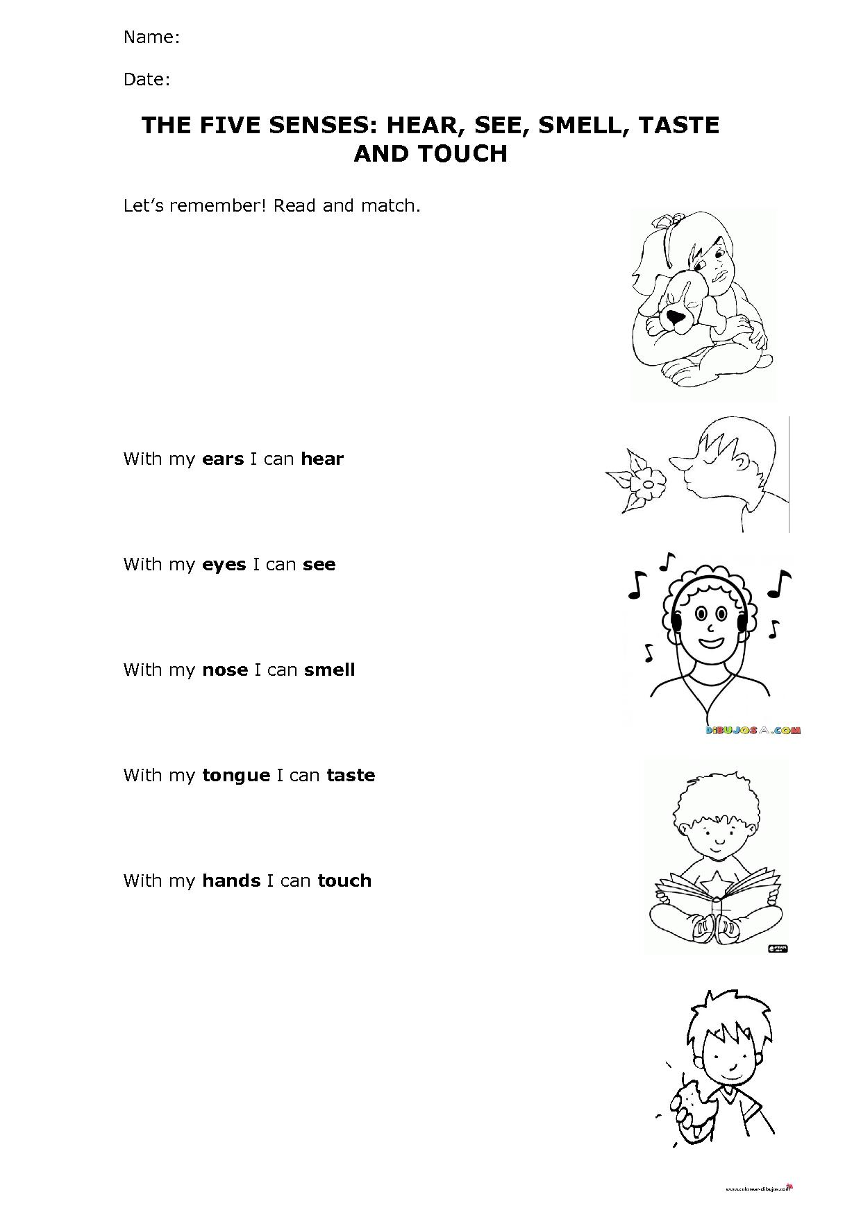 The Five Senses Hear See Smell Taste And Touch Worksheet