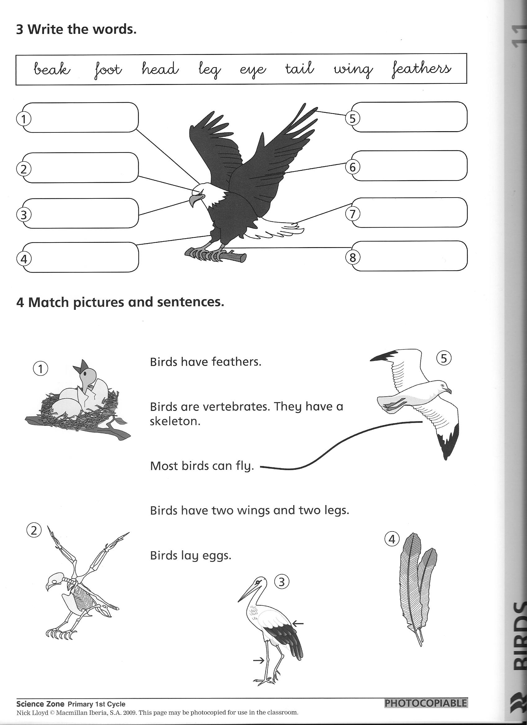 Worksheet Classification Of Animals Worksheet Grass