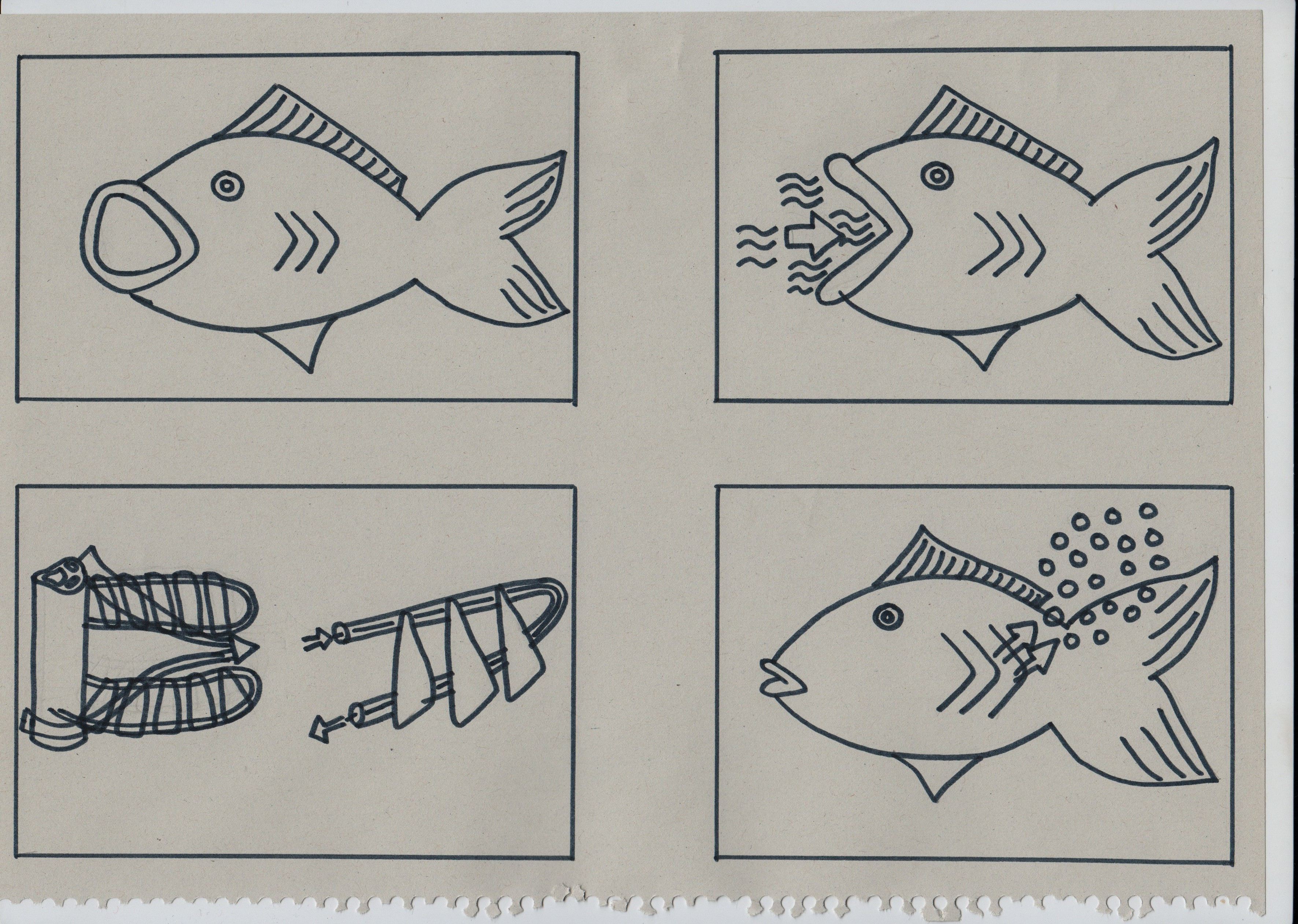 Unit 4 Classification Of Animals Fish