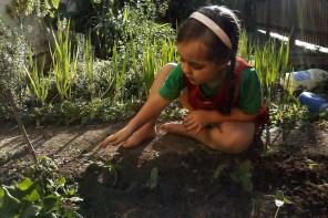Horta na Escola Terra Firme
