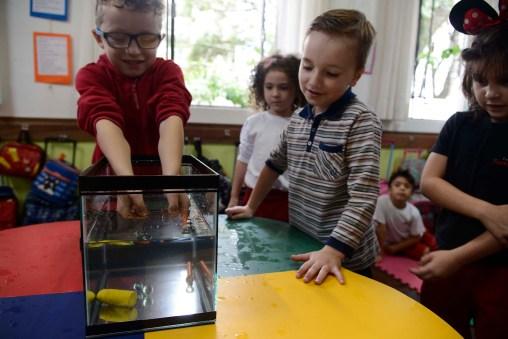 Escola Terra Firme - 1° Ano F - Foto Gilson Camargo