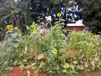 Agrofloresta em 2016