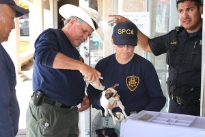 Humane Society enforcement personnel checking animals.