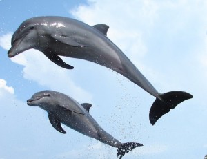 sar and kar are the names of the dolphinso