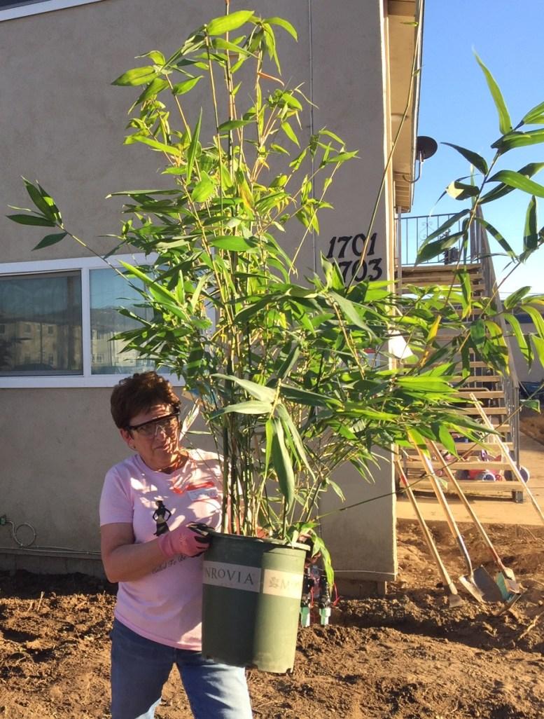 Volunteer landscaping