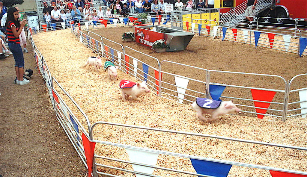 Traditional pig racing?