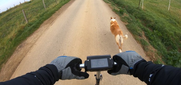 elektroscooter hund