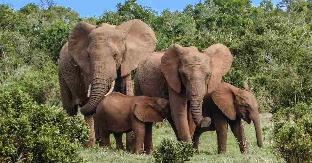 GRACIAS A LA PANDEMIA, HAY UN 'BABY BOOM' DE ELEFANTES EN KENIA