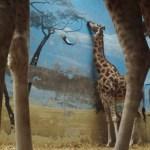 Fotos contadas (V): Cuestión de perspectiva