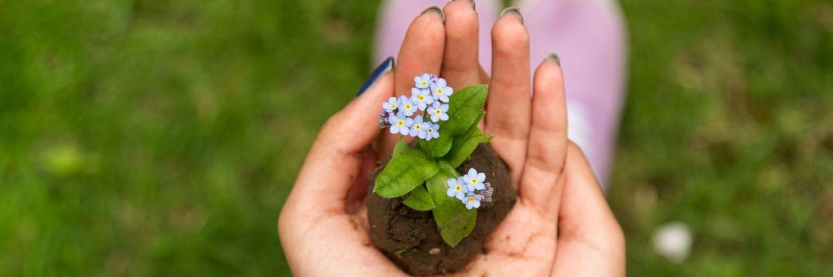 tu fase de crecimiento empresarial. Manos de mujer juntas sujetando un pedazo de tierra con una pequeña planta en crecimiento