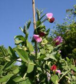 Garden Organic members experiments