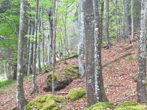 Bosco di latigoglie in Val Lunga