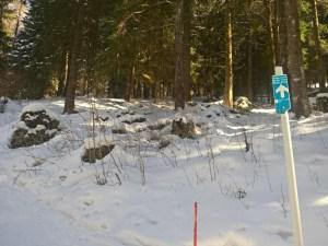 Salita per il bosco