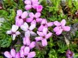 fiori sul Bila Pec