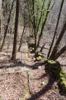 antichi terrazzamenti per l'agricoltura avvolti dal bosco