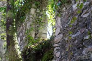 una finestra, oggi gli alberi sono nati dentro le case.