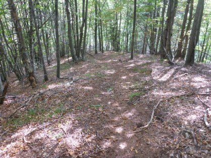 bosco in discesa