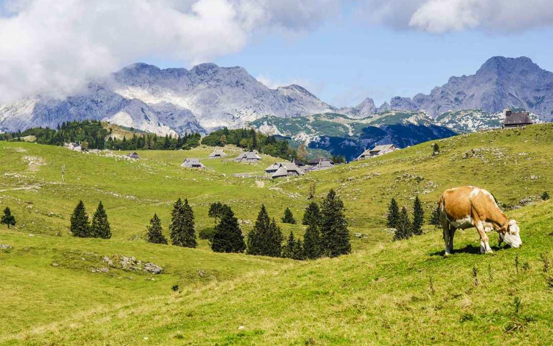 I formaggi di alpeggio da gustare in estate