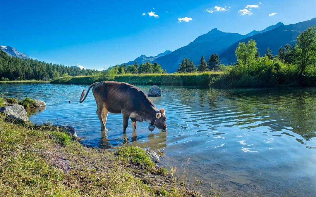 Estrema d'Alpeggio: la Fontina DOP di alta quota