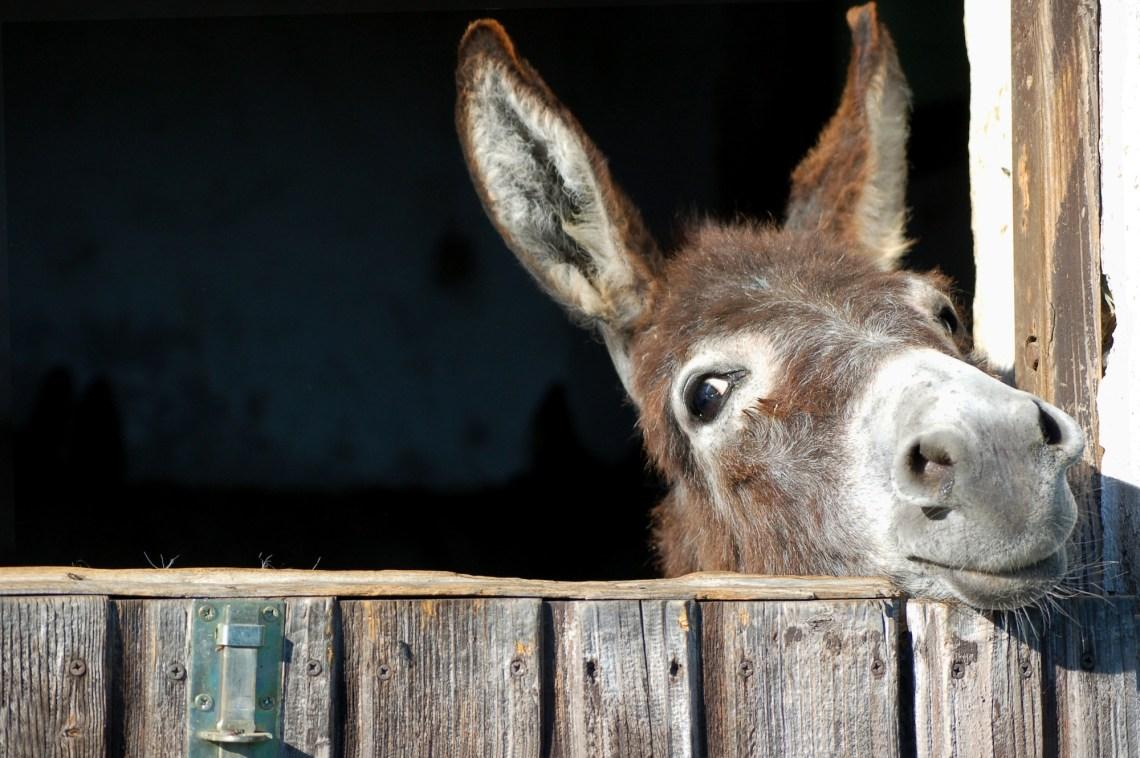 Coaching mit Eseln - tierischer Unterstützung