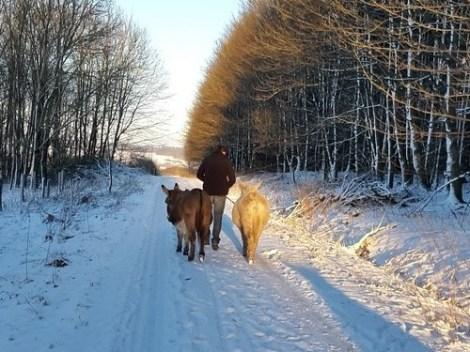 Gutschein_Schnee