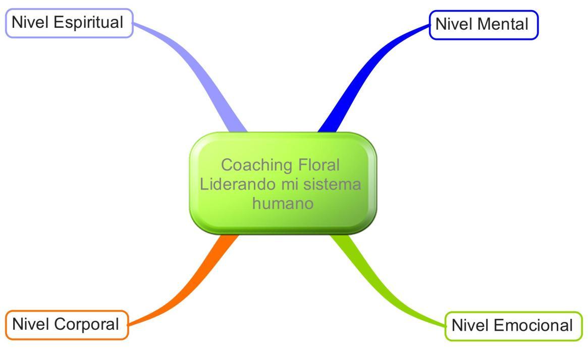 cuatro niveles del coaching flloral