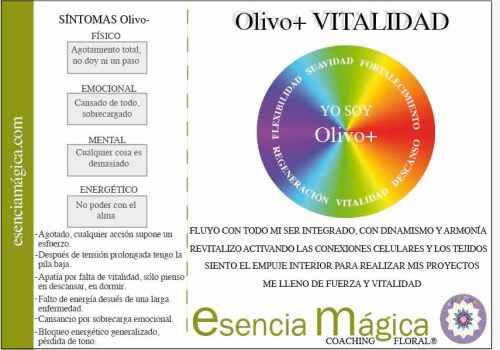 tarjeta coaching floral olivo-vitalidad