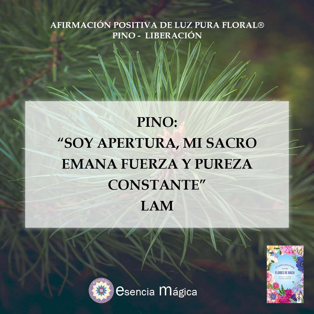 pino lam