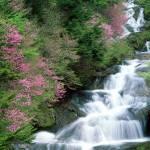 agua de roca flor de bach fluidez