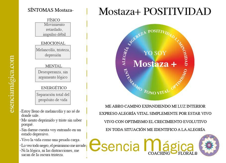 tarjeta cualidades luz pura floral mostaza