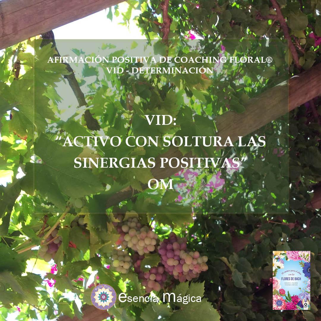 Afirmación positiva de Luz Pura Floral. Vid-Determinación