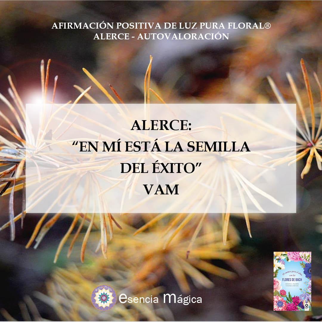 alerce autovaloración afirmación positiva de Luz Pura floral
