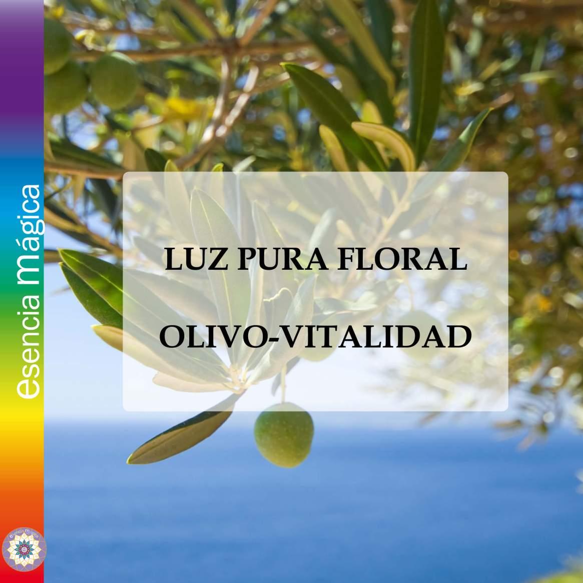 OLIVO-VITALIDAD
