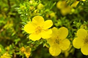 onagra herboristeria xativa