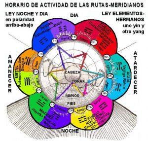yin-yang-i-herboristeria-xativa